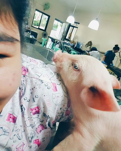 Clingy Bae-con 💕💕🐖🐷🐽 VSCO Vscocam Pet Photography  Animal Photography Veterinary Student Pig