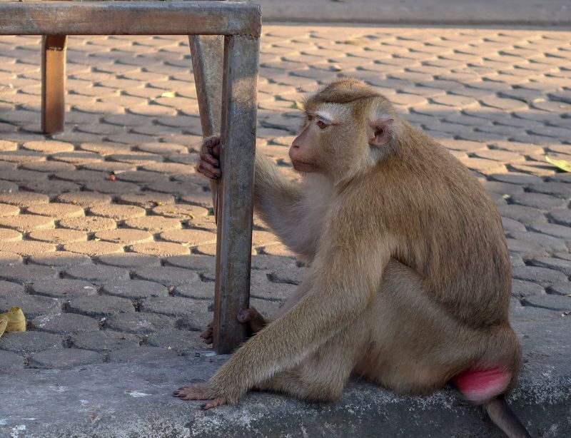 The Monkey Monkey Mammal Sitting Animal Themes Animals In The Wild Outdoors Animal Wildlife Day No People Baboon Nature Close-up