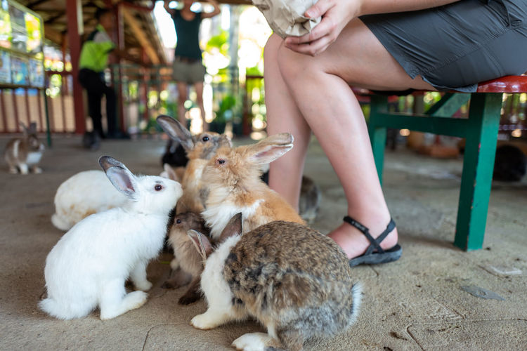 Langkawi Mammal Real People Domestic Animals Vertebrate Domestic Pets One Person Low Section Sitting Human Body Part Group Of Animals Women Focus On Foreground Human Leg Adult Body Part Hand Human Foot Rabbit