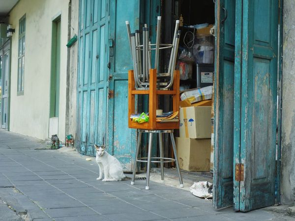 Pets Domestic Animals Animal Themes Cat Streetphotography Street Bangkok Thailand. House Funny One Animal Mammal No People Architecture Building Exterior Day Outdoors