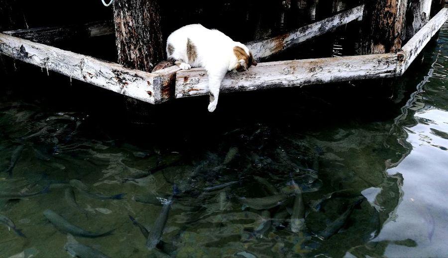 Cat Fishing Dinner Time Water Underwater