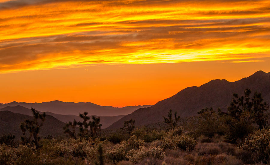 Sunset in desert!🌞🌞 Sunset Landscape Scenics Mountain Dramatic Sky Sky Tree Nature Cloud - Sky Beauty In Nature Sunlight SunsetInMountains Cactus Cactus Tree Sunsetindesert EyeEm Best Shots EyeEm Nature Lover in Arizona United States The Great Outdoors - 2017 EyeEm Awards