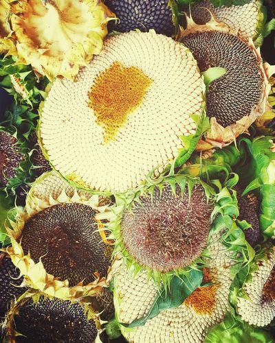 Sonnenblumen -