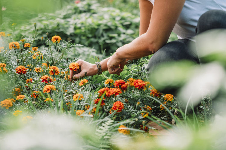 Low angle view of person hand on flowering plants