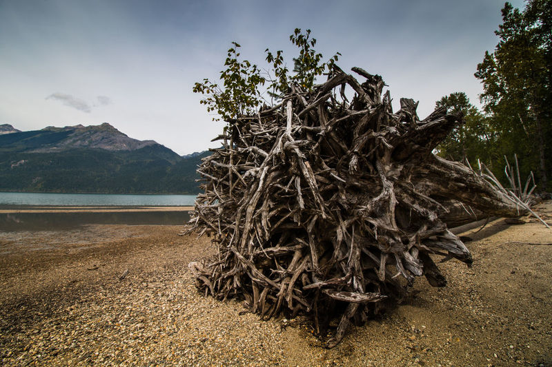 Azur Lake Dead Tree Wells Grey Provincial Parc Beauty In Nature Day Gravel Landscape Mountain Nature No People Outdoors Roots Scenics Tranquil Scene Tranquility Tree Trunc Water