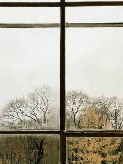 Window Sky Day No People Glass - Material Tree Transparent Nature Plant Outdoors Pattern Architecture Glass Frosted Glass Built Structure Window Frame Cold Temperature