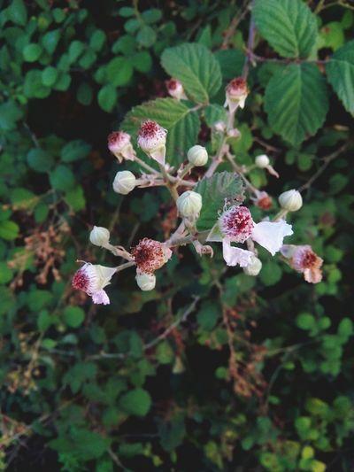 Nature Flowers,Plants & Garden Bogurtlen Doğa