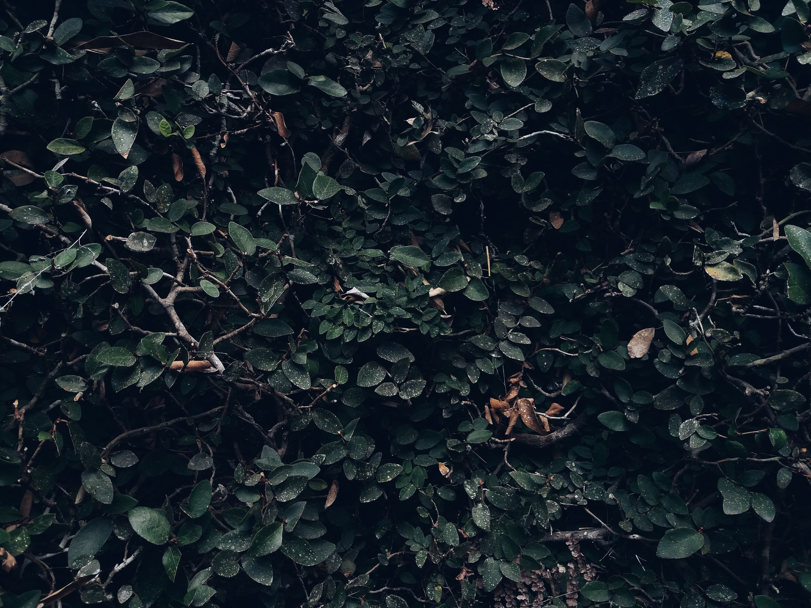 nature, tree, growth, no people, beauty in nature, low angle view, full frame, outdoors, tranquility, backgrounds, branch, day, close-up, sky