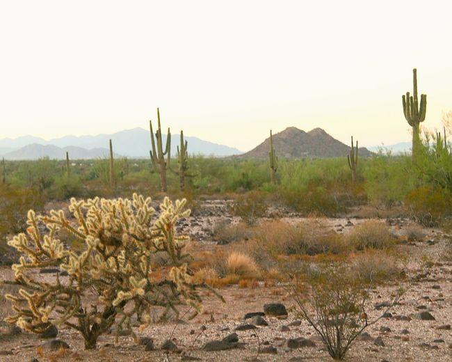 Cactus Desert Mountains Arizona Arizona Sunset Sonoran Desert National Park Sonoran Desert Sunset Sonoran Desert National Park Miles Away