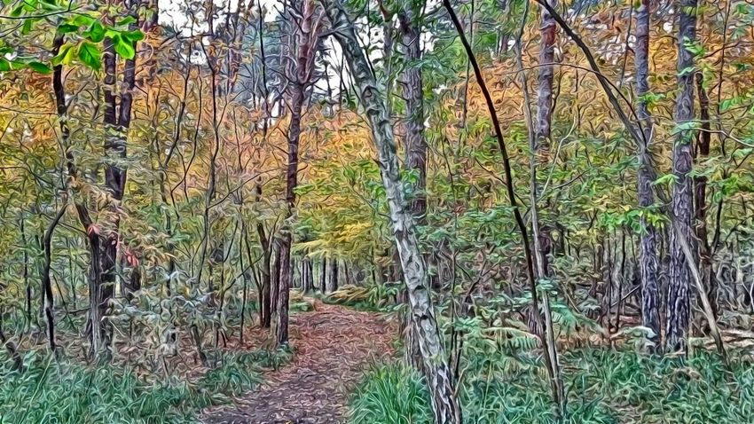 Autumn Natural Park Digital Painting