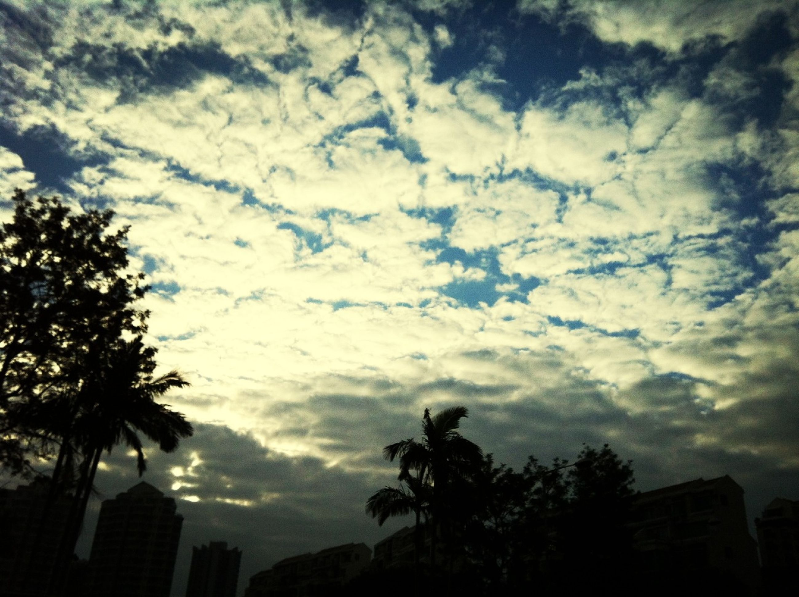sky, cloud - sky, cloudy, low angle view, tree, silhouette, building exterior, built structure, architecture, cloud, weather, overcast, nature, dusk, beauty in nature, scenics, palm tree, sunset, storm cloud, outdoors