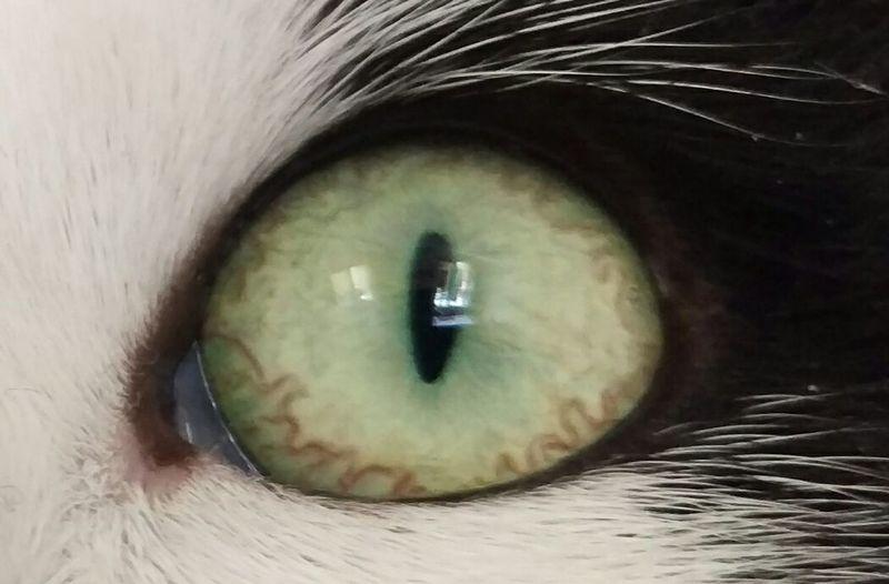 Schnaps Eye First Eyeem Photo