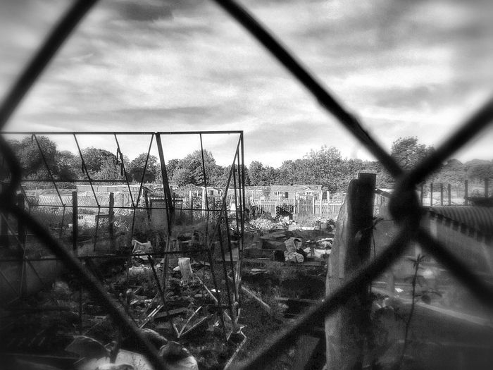Trees and plants seen through chainlink fence against sky