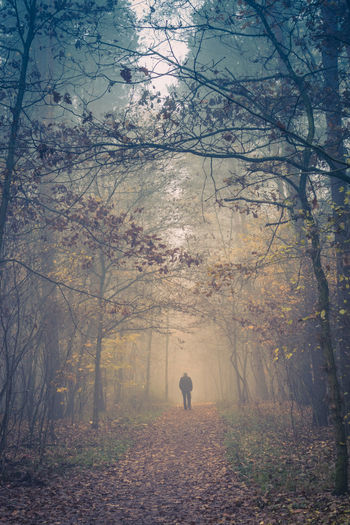 Autumn Fog Forest Leaf Nature Old One Person Outdoors Scenics Tree Walking