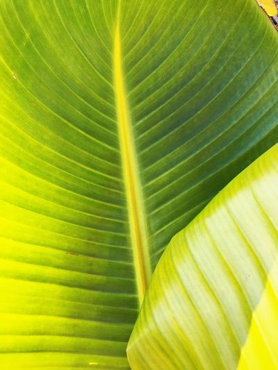 Green Color Nature Leaves Close-up Tropical Plant