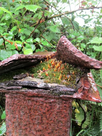 Metal Post Close-up Countryside Day Growth Moss Nature No People Outdoors Weathered