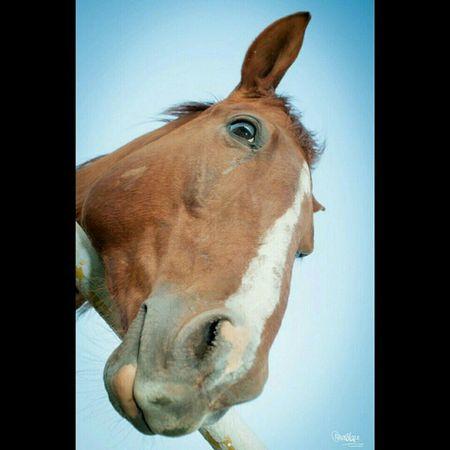 Bojackhorseman Horses Casualphotography Okc