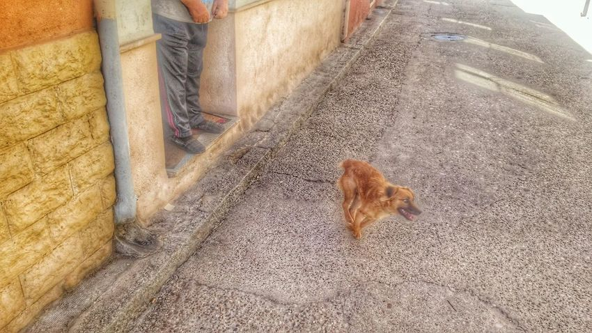 """""""Linda"""" and his master """"Guillermo"""" Animal Themes Domestic Animals One Animal Pets Dog Mammal Street Sitting High Angle View Full Length Zoology Brown Animal Domestic Cat Day Outdoors No People"""
