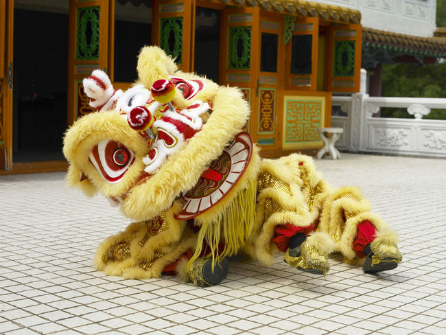 yellow lion dance at temple Celebration Gong Xi Fa Cai Good Luck Lion Dancers Lion Dance Performance Traditional Culture Animal Representation Chinese Lion Chinese New Year Costume Cultures Day Festive Lion Dance Opening Event Performance Religious  Special Occasion