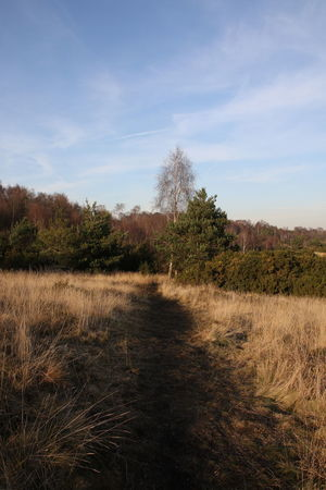 Beauty In Nature Chobham Common Cloud - Sky Day Footpath Grass Growth Landscape Nature No People Outdoors Scenic View Scenics Sky Surrey Countryside Track Tranquility Tree