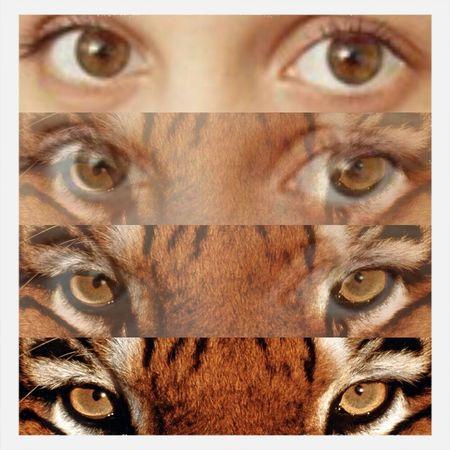Sweet Tiger Rrrrrrrrr Eyes