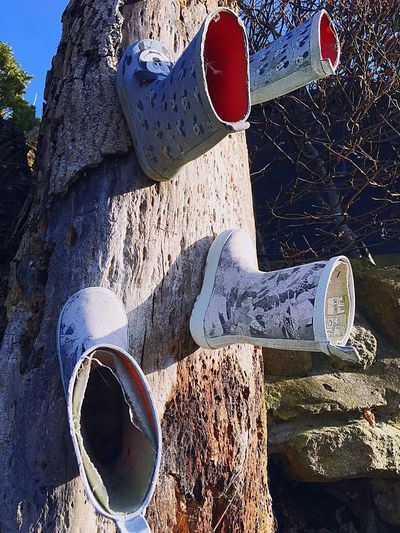High angle view of shoes on tree trunk