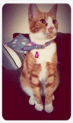 Zimbas 1year old birthday today. <3 Cat Love Animal Love Love ♥ Uppsala