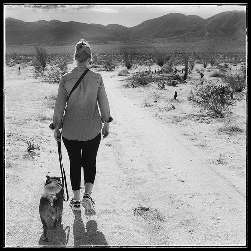 Photo444 Blackandwhite Black And White Fujix100f Fujifilm Swedish Vallhund Walking Nature