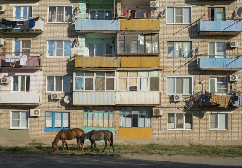 Modern life in the Steppe Horses Kalmykia Animal Apartment Apartment Building Architecture Building Exterior City Day Domestic Animals Horses In The City Lagan No People Residential District