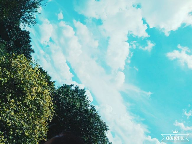 CeuAzul Sky Cloud - Sky Tree Low Angle View Day Outdoors No People Nature First Eyeem Photo