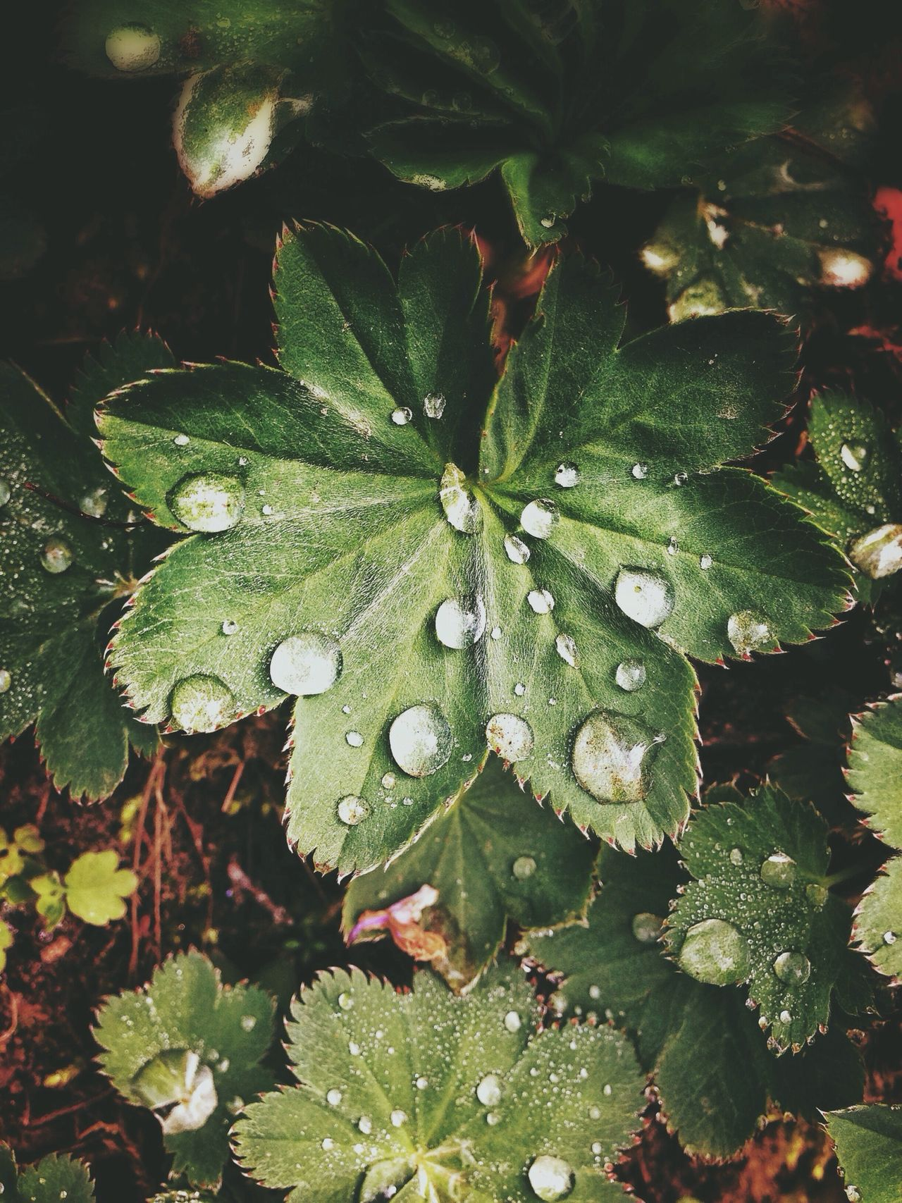 Close-up of wet leaves in forest