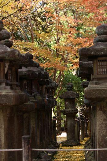 奈良公園 奈良 Japan