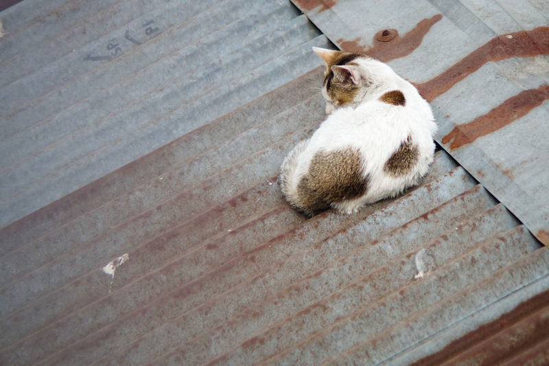 Adapted To The City Animal Themes Cat Cats Of EyeEm Cat♡ Day Domestic Animals Domestic Cat Feline High Angle View Indoors  Mammal No People One Animal Pets