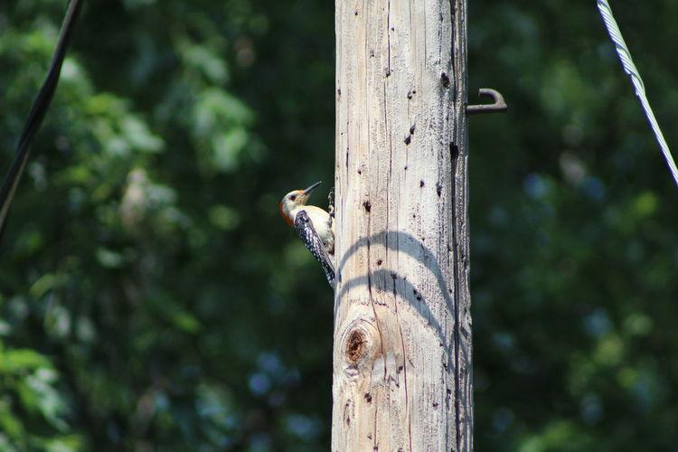 Woodpecker on tree trunk