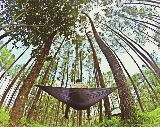 Chill Tree Hammock Hanging Growth Nature Sky Swing Vacations No People Outdoors Day Grass Beauty In Nature The Secret Spaces TCPM Live For The Story