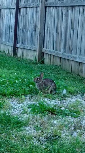 Rabbit Rabbit Grass Wooden Fence Gravel