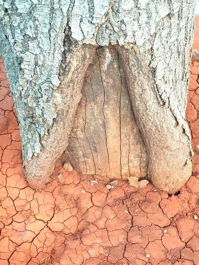 Tree Bark Bark