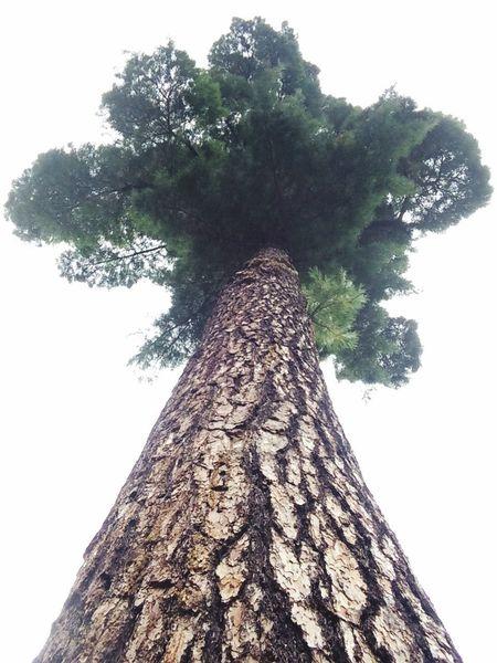 NaturesBest EyeEm Nature Lover Trees