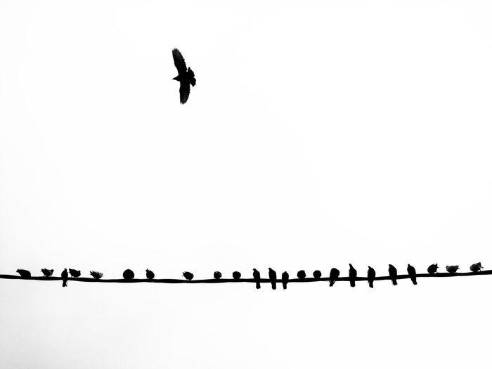 Freedom Showcase: January Fly Free Bird Silhouette Sky Urban Crow Black And White Urban Concept
