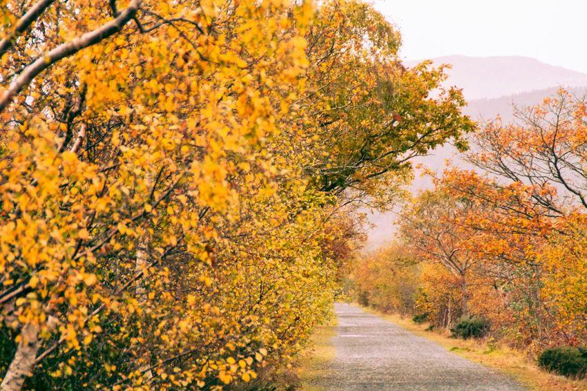 Autum Cymru Wales West Wales Cymru-photography Trail Walk Dolgellau Autumn Leaves Autumn Autumn🍁🍁🍁 Autumn 2015