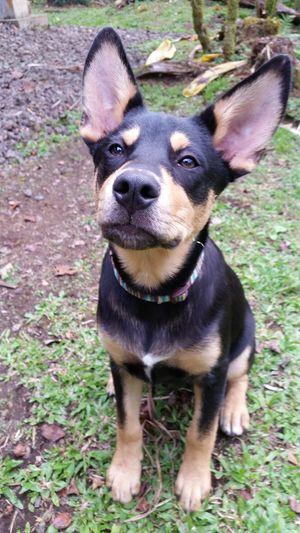 Poi Dog Ears