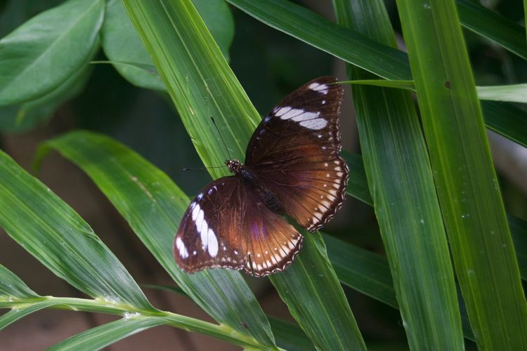 Animal Themes Animals In The Wild Beauty In Nature Butterfly - Insect Close-up Day Flower Fragility Freshness Green Color Growth Insect Leaf Nature No People One Animal Outdoors Plant