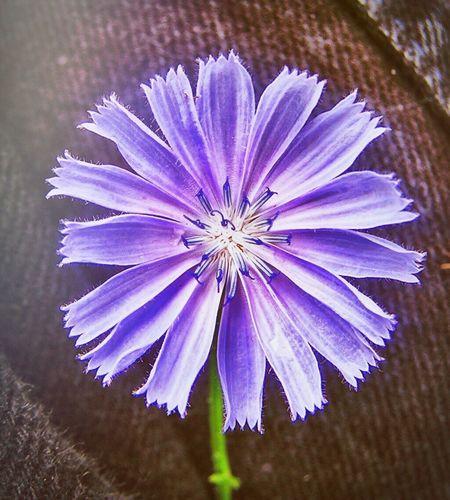 Felicity Flower Purple Color Closeup