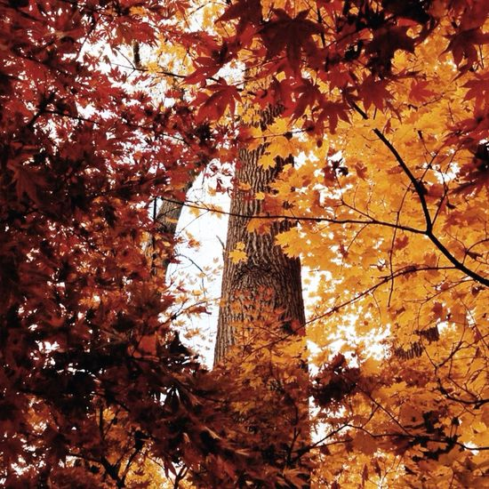 Leaves Autumn EyeEm Best Shots eye4photography