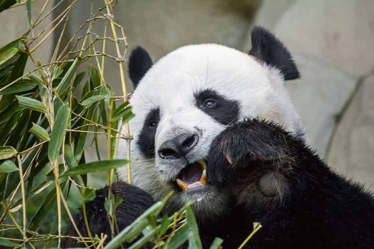 Close-up of animal eating in zoo