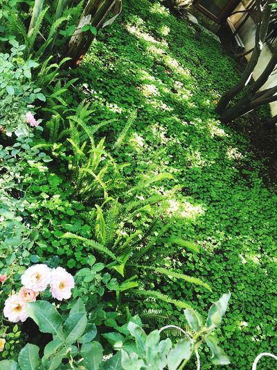 Plant Growth Green Color Nature Beauty In Nature Day Flower High Angle View No People Flowering Plant Sunlight Freshness Outdoors Park Tranquility Grass Park - Man Made Space Plant Part Leaf Field