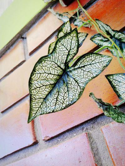 Plastic Saeta Ladrillos Green Capture The Moment Colour Of Life