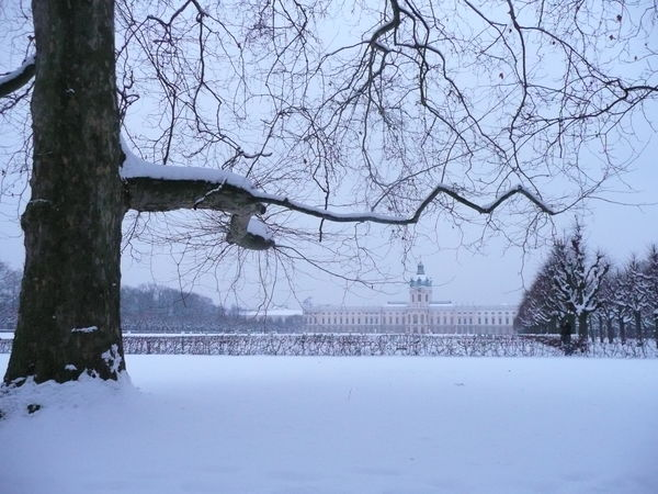 Bare Tree Beauty In Nature Berlin Palace In Winter Nature Outdoors Schloss Charlottenburg Berlin Snow Snowing Tranquility Winter Winter In Berlin