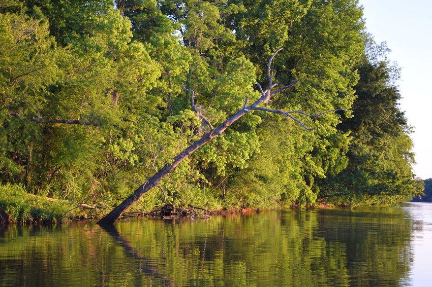 Alabama Alabama River Beauty In Nature Lake Nature Outdoors Tree Water Alabama River At Catoma Creek Alabama Fishing Water Reflections Alabama Outdoors