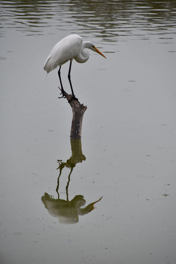 Bird in a lake